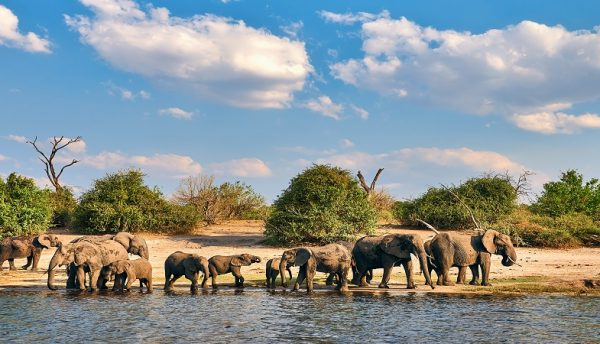 Dell Technologies aids Elephants Alive conservation efforts in South Africa
