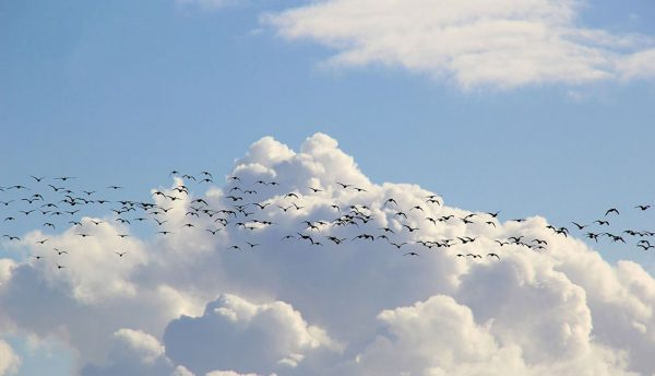 Five steps to successful and confident cloud migration, even in a pandemic