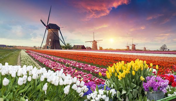 The Netherlands is leading the digital pack – But can it stay there