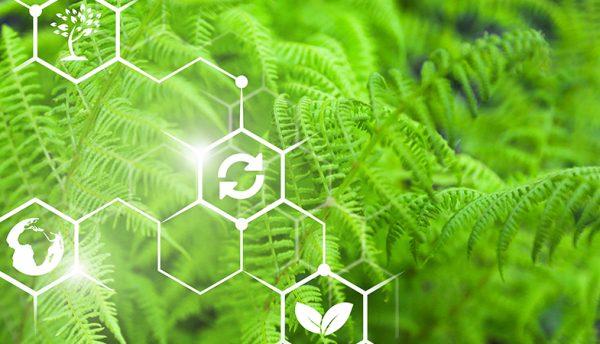 Relatório da SAP aponta que a sustentabilidade ainda é um desafio