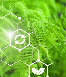 SAP report finds sustainability still challenging to implement
